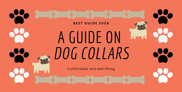 A guide on Dog collars